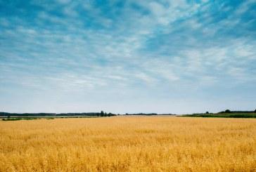 טרנד מסוכן: רוכשים קרקע חקלאית במקום דירה